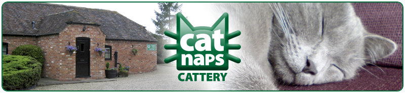 Welcome to CatNaps